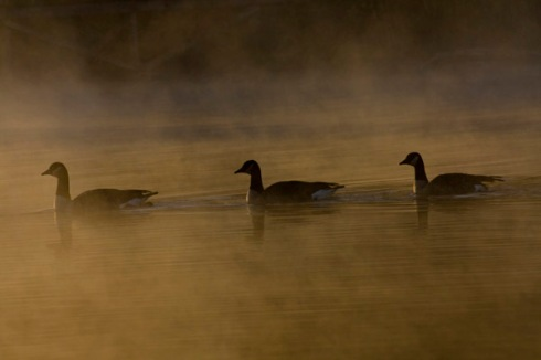 10_31_geese_on_lake_norman_nc